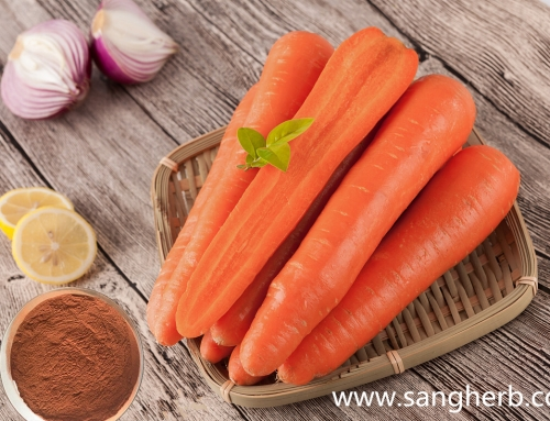 What factors affect the absorption of carotene?